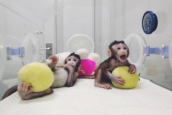 клонирование, клоны, медицина Китая