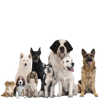 закон о животных, кинологи, опасные породы собак, собаки