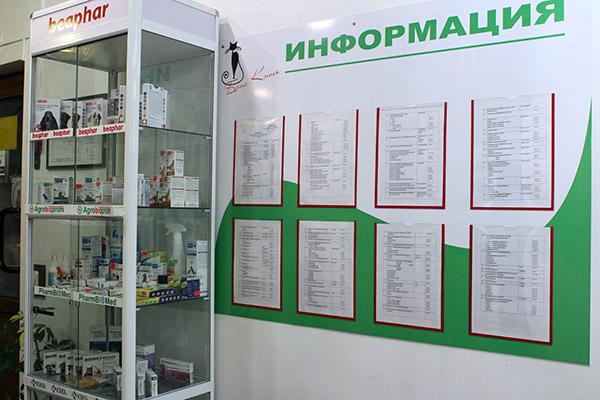 Бона Кэти, Галина Стешенко