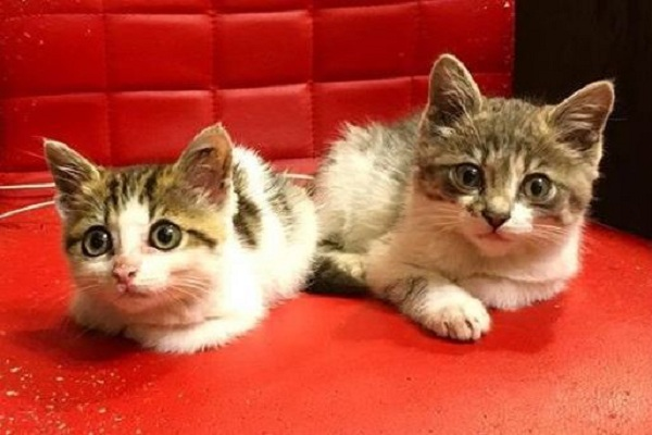 ветеринария, социальные ветклиники