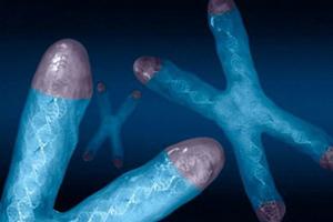 Ученые узнали секрет вечной молодости у морских звезд